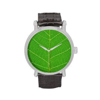 planta vegetal de la ecología del fondo de la hoja reloj de mano