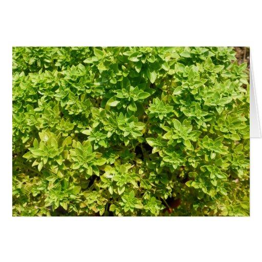 planta verde del fondo del follaje tarjeta pequeña