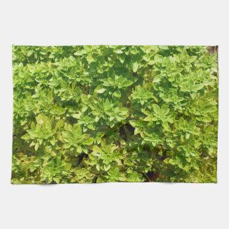 planta verde del fondo del follaje toallas de cocina