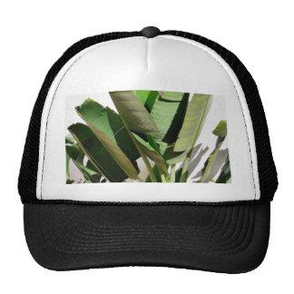 Planta verde del plátano en la pared blanca gorras