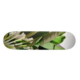 Planta verde del plátano en la pared blanca patin personalizado