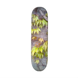 Planta verde en una pared de piedra tabla de skate