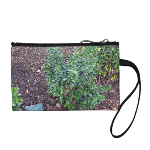 Planta verde por completo de pequeñas frutas azule