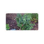 Planta verde por completo de pequeñas frutas azule etiquetas de dirección