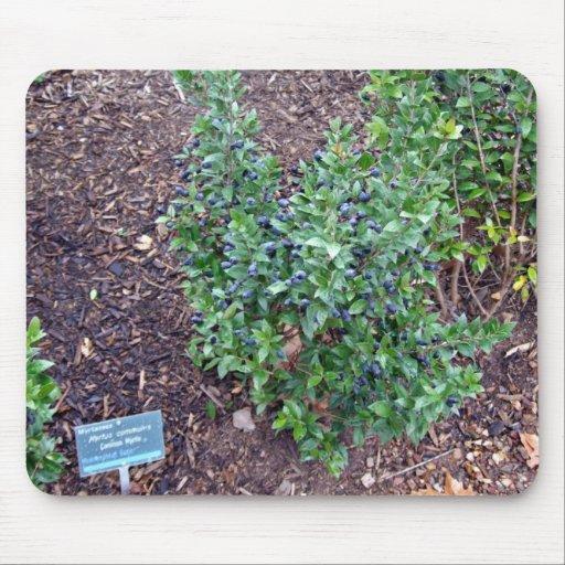 Planta verde por completo de pequeñas frutas azule tapete de ratón