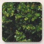Planta verde posavasos
