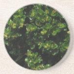 Planta verde posavasos personalizados