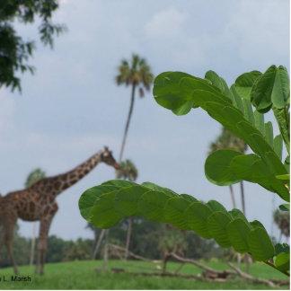 Planta y cielo azul con las jirafas en el fondo esculturas fotograficas
