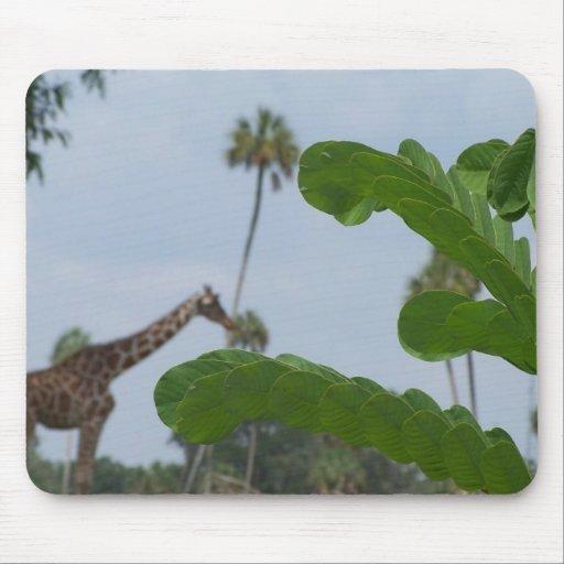 Planta y cielo azul con las jirafas en el fondo alfombrillas de raton