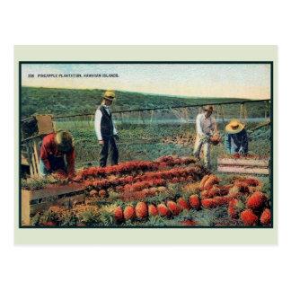 Plantación 1900 de la piña del vintage c Hawaii Tarjetas Postales