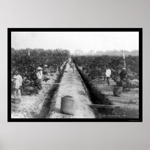 Plantación de café de Singapur 1898 Póster