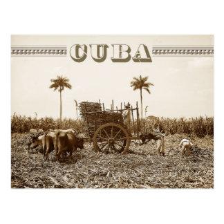 Plantación de la caña de azúcar en Cuba Tarjetas Postales
