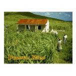 Plantación de la caña de azúcar, Puerto Rico Postal