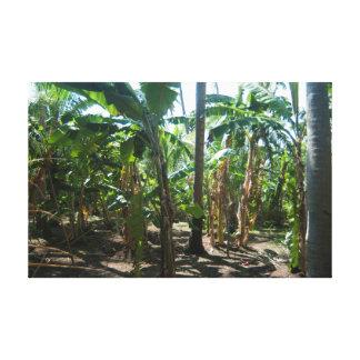 Plantación de la palma del plátano lienzo envuelto para galerias