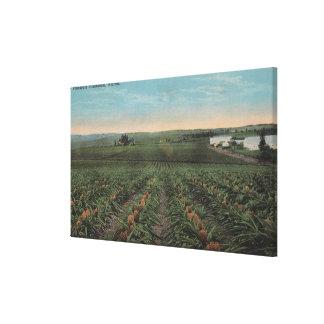 Plantación de la piña lista para la cosecha en flo impresión en lona