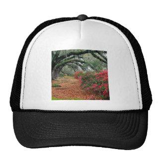 Plantación de las azaleas del árbol y de los roble gorras
