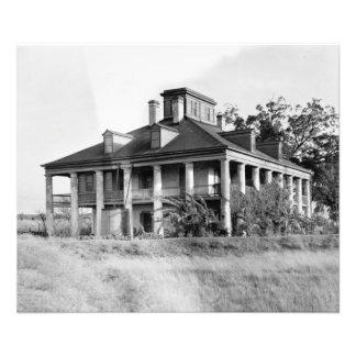 Plantación de siete robles, impresión de la foto d