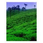 Plantación de té membrete a diseño