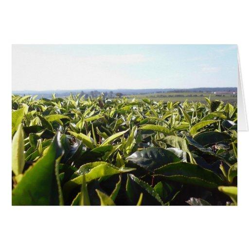 Plantación de té tarjeta de felicitación