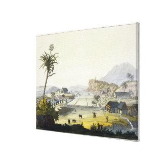 Plantación del azúcar, Antillas (grabado del color Lienzo Envuelto Para Galerias