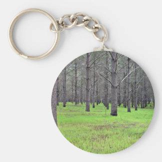 Plantación del pino cubierta por la hierba llaveros