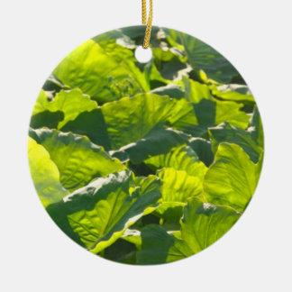 Plantación del taro adorno redondo de cerámica
