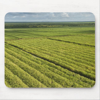 Plantaciones de la caña de azúcar, Guyana Mouse Pads