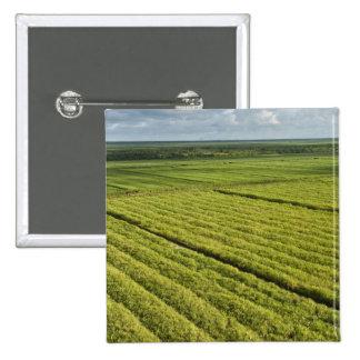 Plantaciones de la caña de azúcar, Guyana Pin Cuadrado