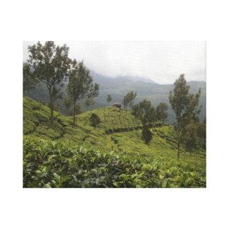 Plantaciones de té de Munnar de la India Impresión En Tela