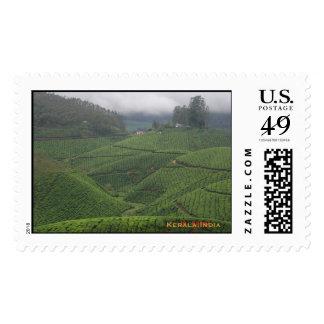 Plantaciones de té, Munnar Envio