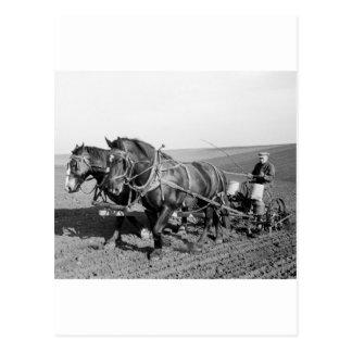 Plantador del maíz de Iowa, los años 40 Tarjeta Postal