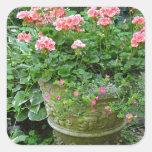 Plantador rosado de la flor del geranio calcomania cuadradas personalizadas