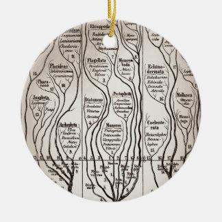 Plantae Protista Animalia Ceramic Ornament