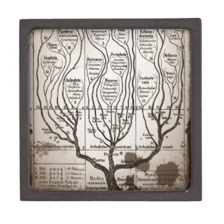 Plantae Protista Animalia Gift Box