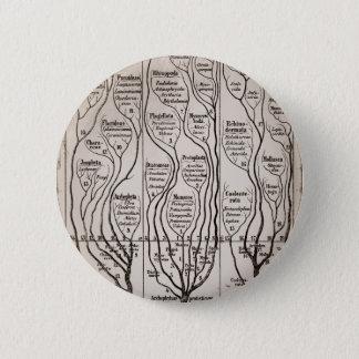 Plantae Protista Animalia Pinback Button