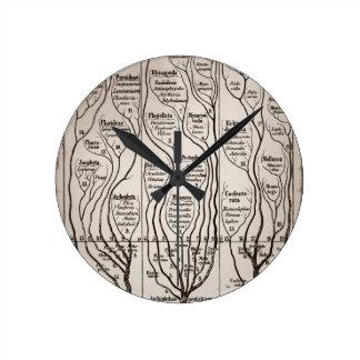 Plantae Protista Animalia Round Clock