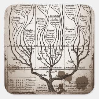 Plantae Protista Animalia Square Sticker