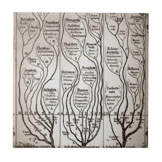Plantae Protista Animalia Tile