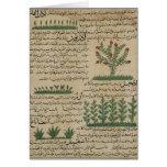 Plantas botánicas, ejemplo del ' tarjetón