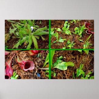 Plantas carnívoras póster