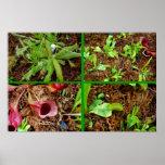 Plantas carnívoras posters