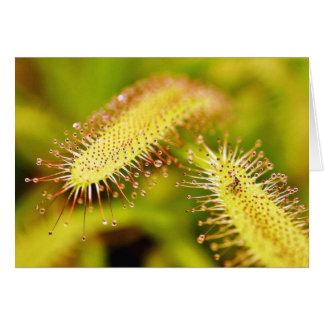 Plantas carnívoras tarjeta de felicitación