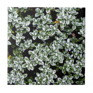 Plantas congeladas del invierno azulejo cuadrado pequeño