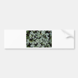 Plantas congeladas del invierno etiqueta de parachoque