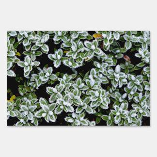 Plantas congeladas del invierno letrero