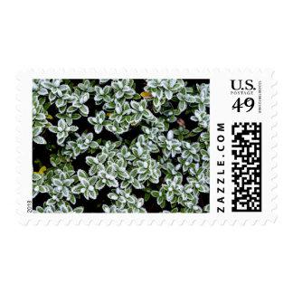 Plantas congeladas del invierno timbre postal