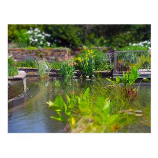 Plantas de agua en los jardines de Powell de la Postales