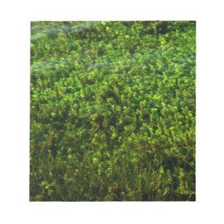 Plantas de agua subacuáticas en la charca blocs