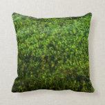 Plantas de agua subacuáticas en la charca almohadas