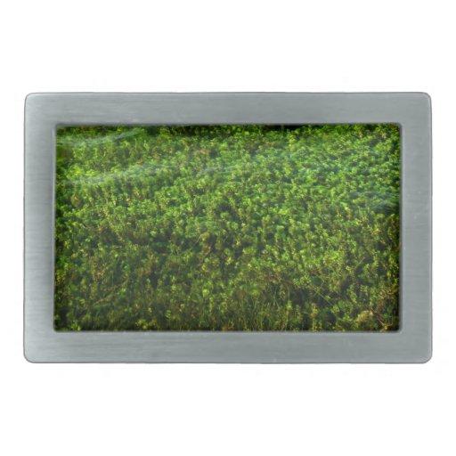 Plantas de agua subacuáticas en la charca hebillas cinturon rectangulares